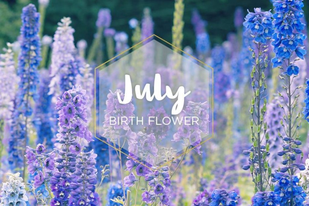 July Month Flower Images