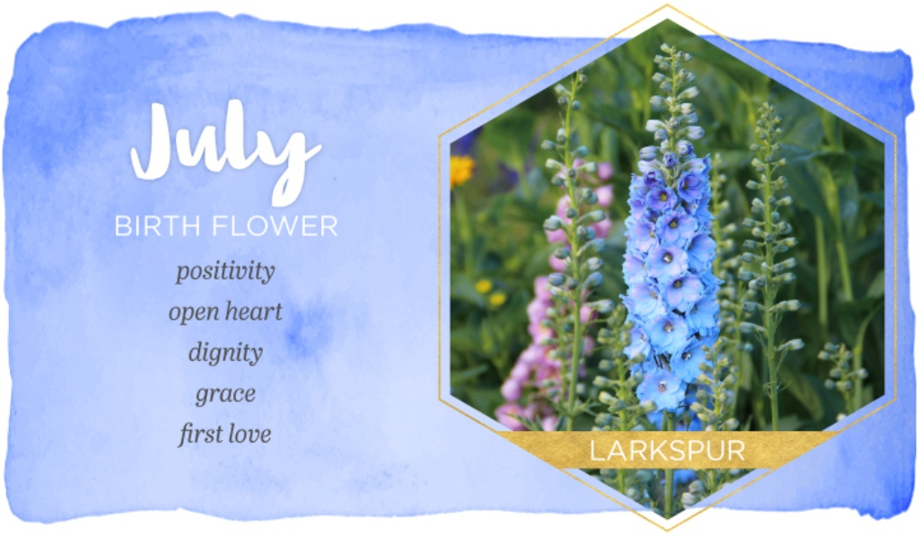 July Month Flower Pictures