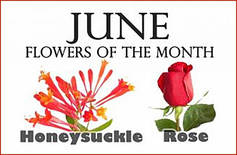June Birth Flower Pictures