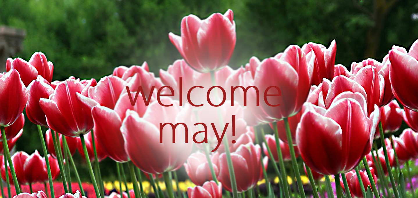 Welcome May Images Roses Background