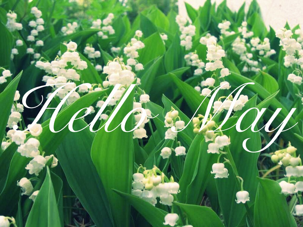 Welcome May Quotes Hd Wallpaper