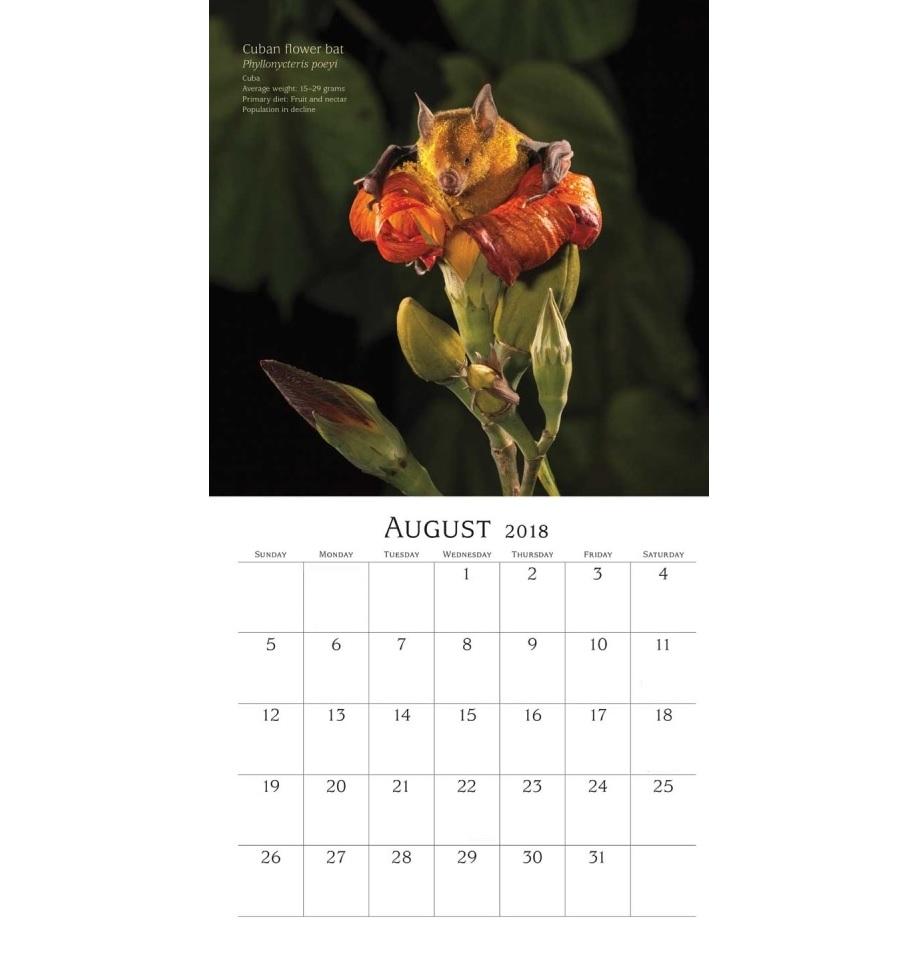 August Bats 2018 Wall Calendar