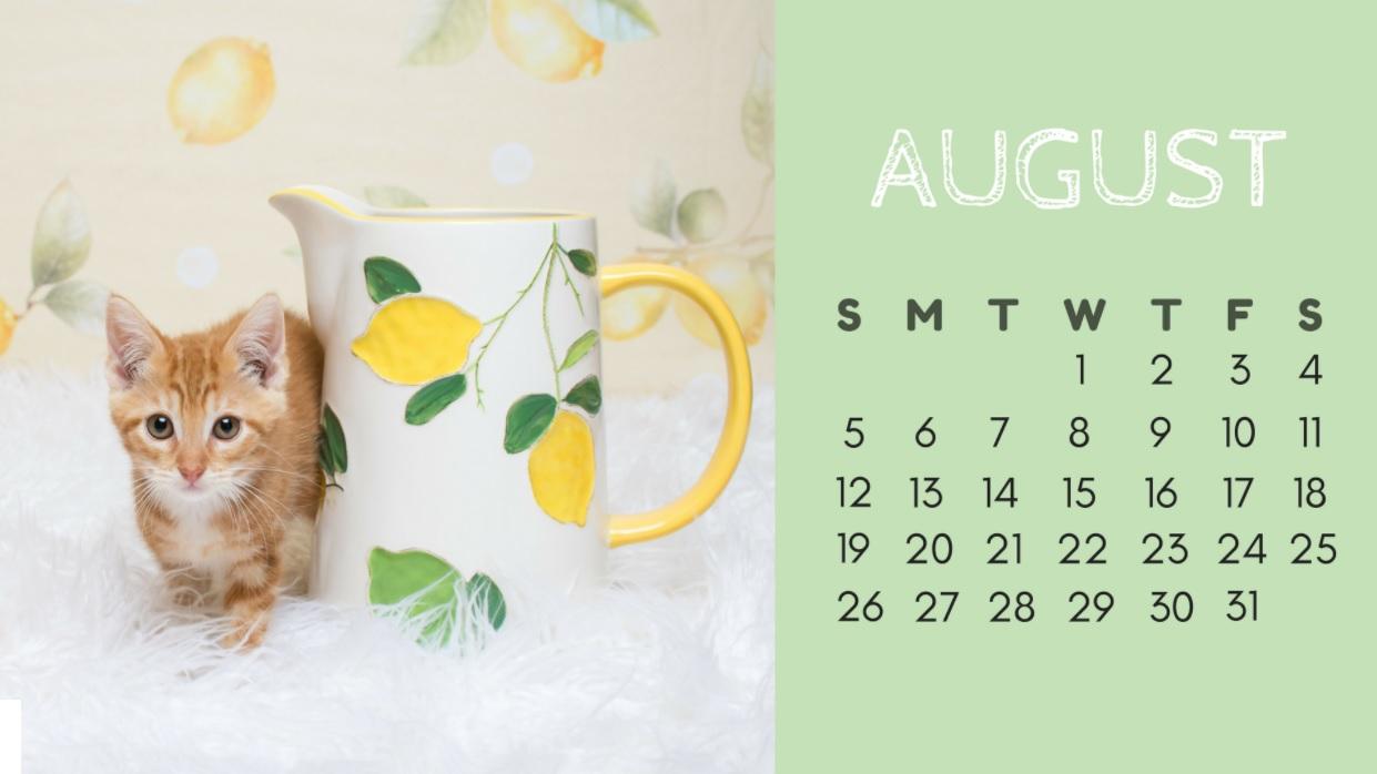 Cute August 2018 Desktop Calendar