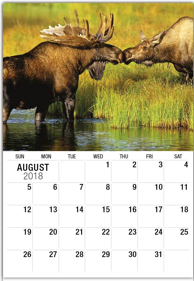 Wildlife August 2018 Personalized Calendar