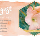August Birth Flower