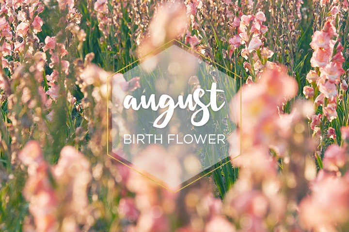 August Flower of The Month