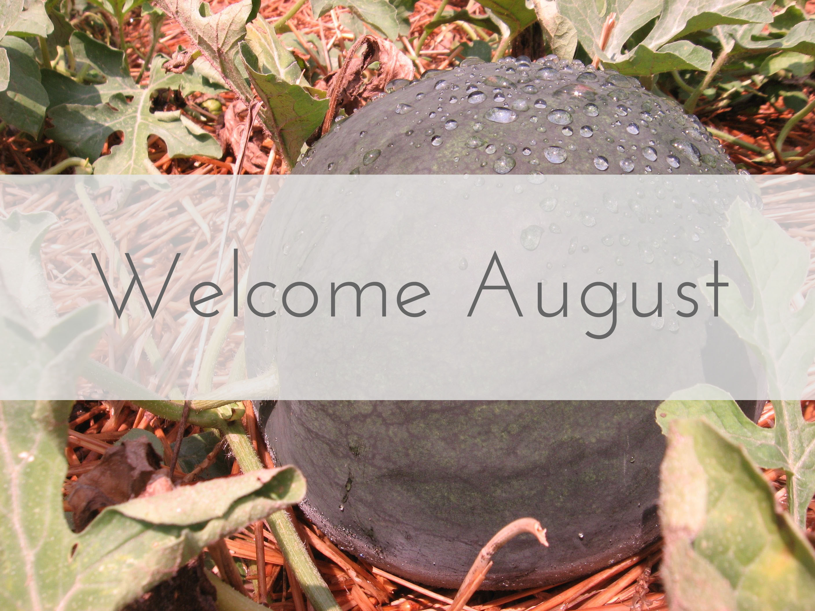 Welcome August Images Summer