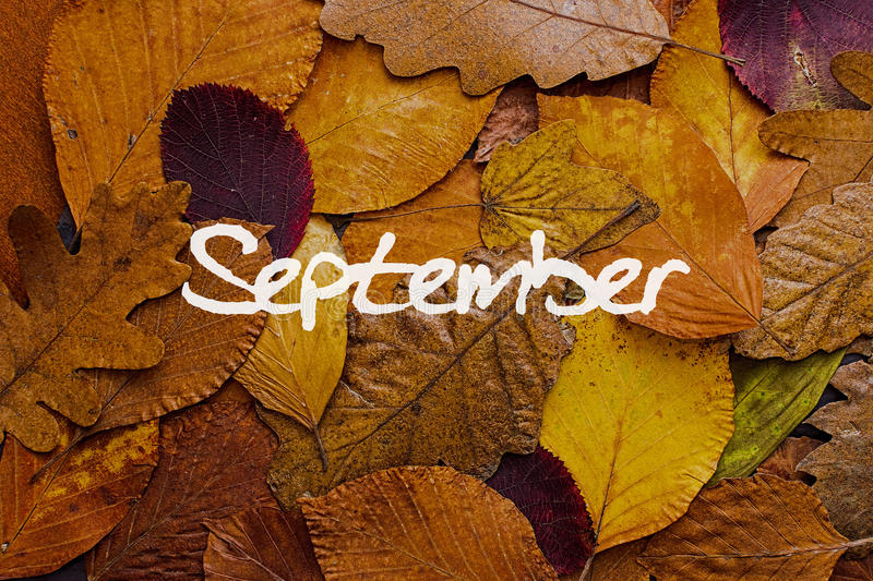Autumn Leaves Colorful Background September Pictures