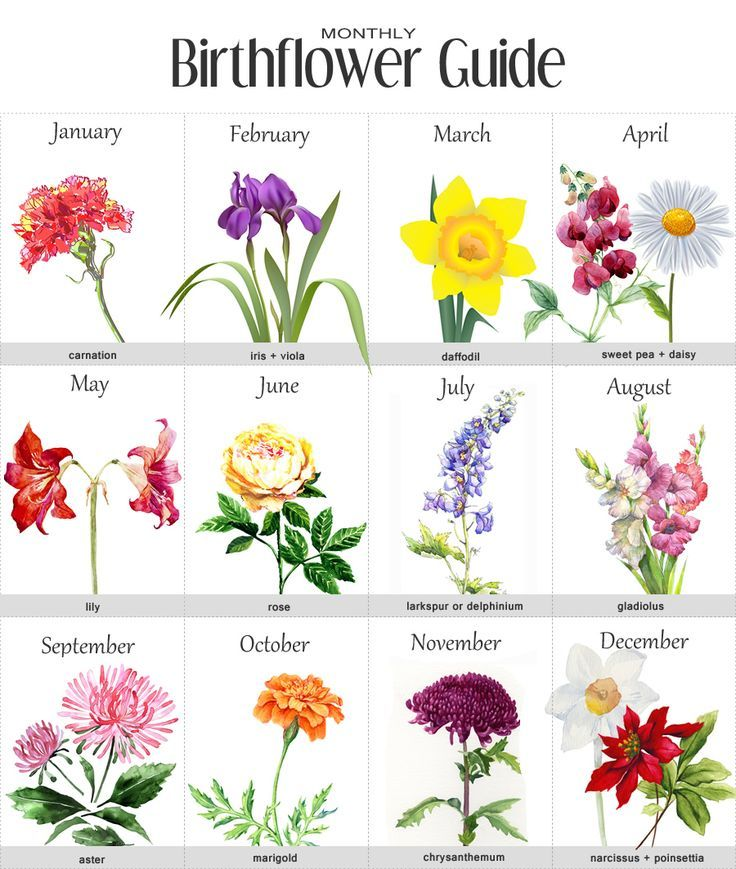 Birth Flower By Month