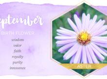 September Birth Flower Meaning