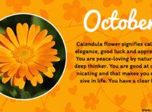 October Birth Flower Calendula