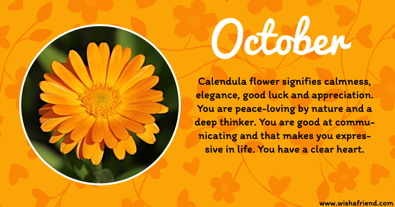 October Birth Flower Calendula