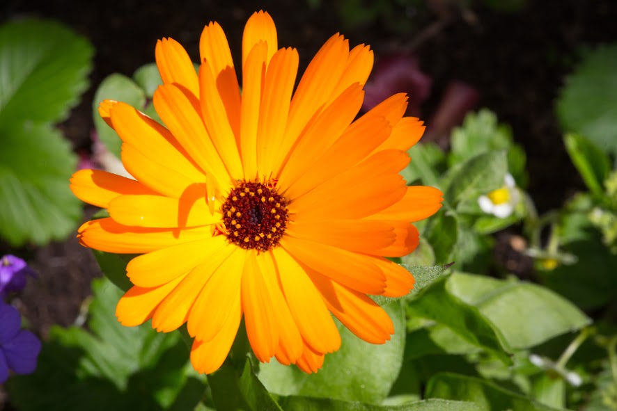 October Birth Flower Pictures