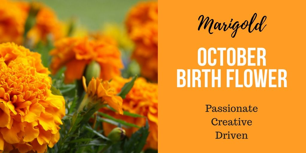 October Month Birth Flower Marigold