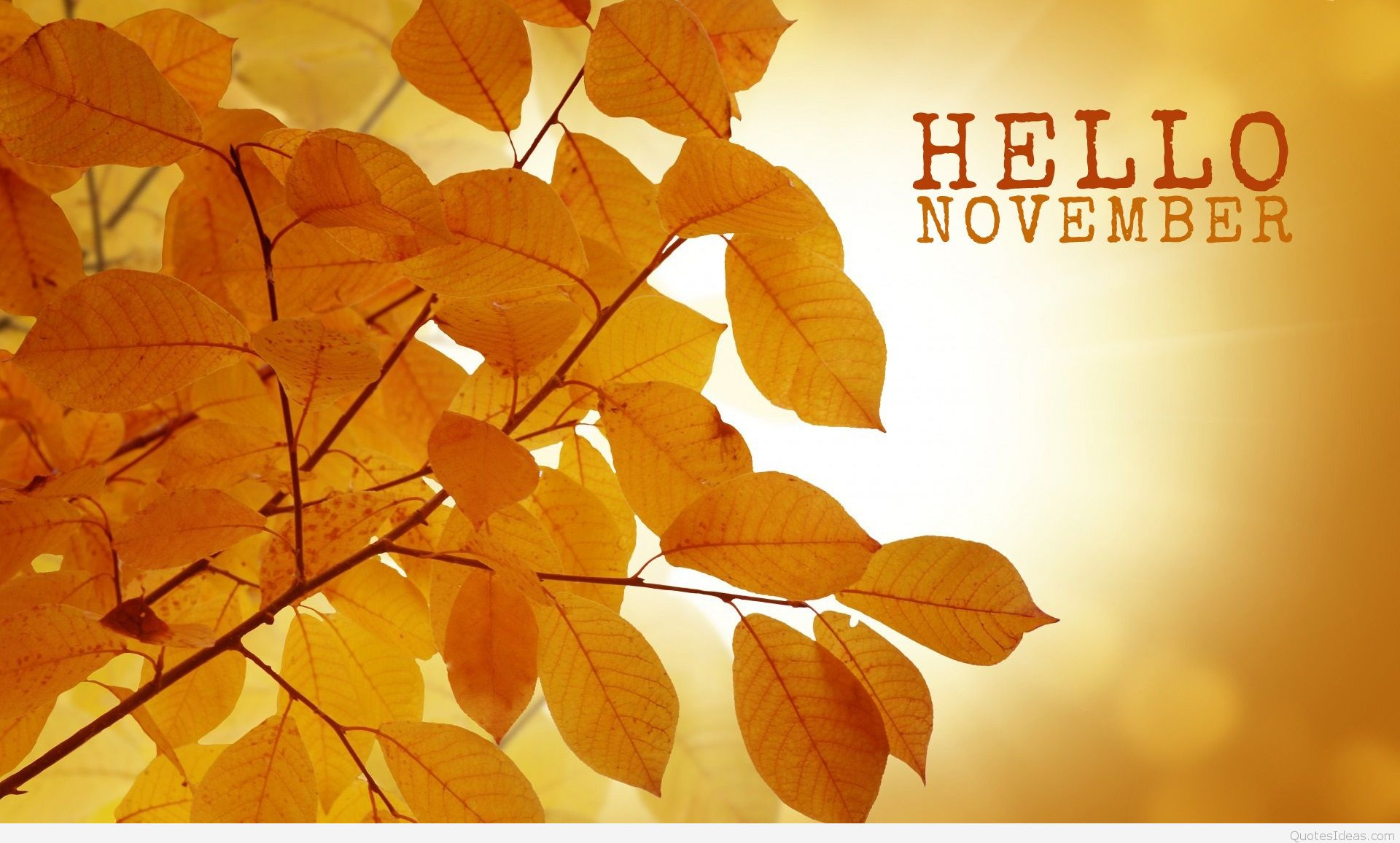 Goodbye October Hello November Wallpaper for Desktop