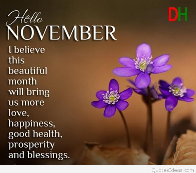 Hello November Sayings Pictures