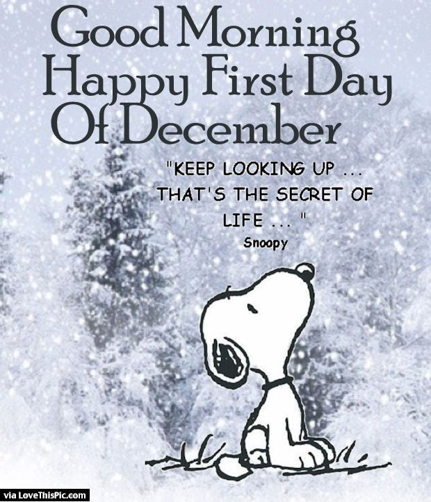 Hello November Snoopy Funny Quotes and Sayings