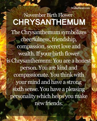 November Birth Flower Chrysanthemum Meaning