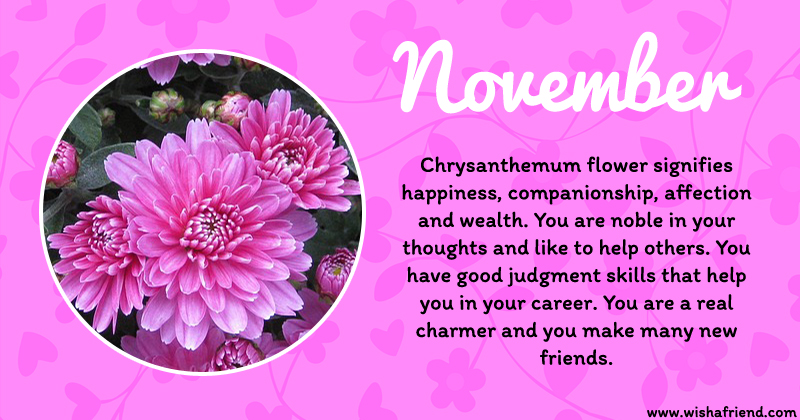 November Month Birth Flower
