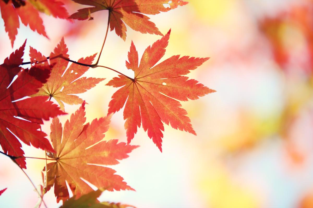 November Photos for Desktop