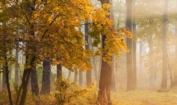 November Photos for Facebook