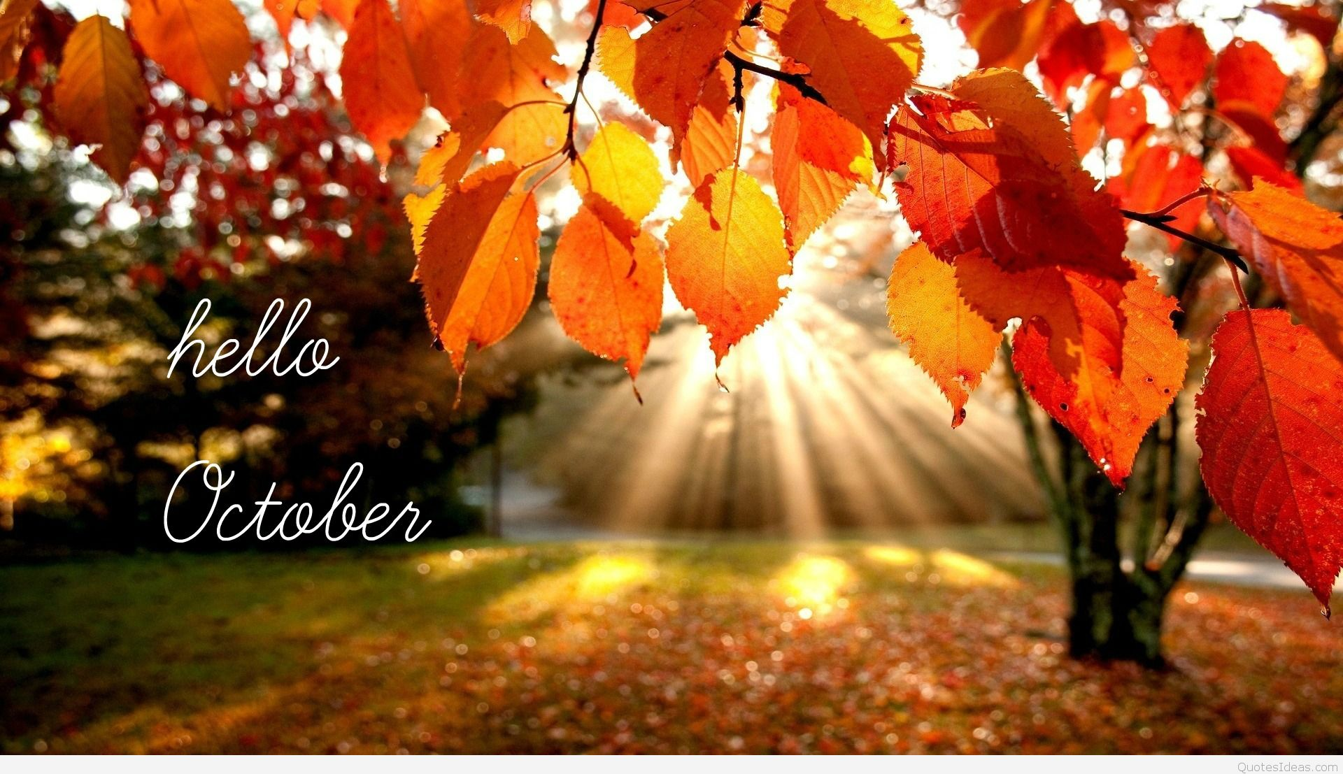 Welcome October HD Wallpaper
