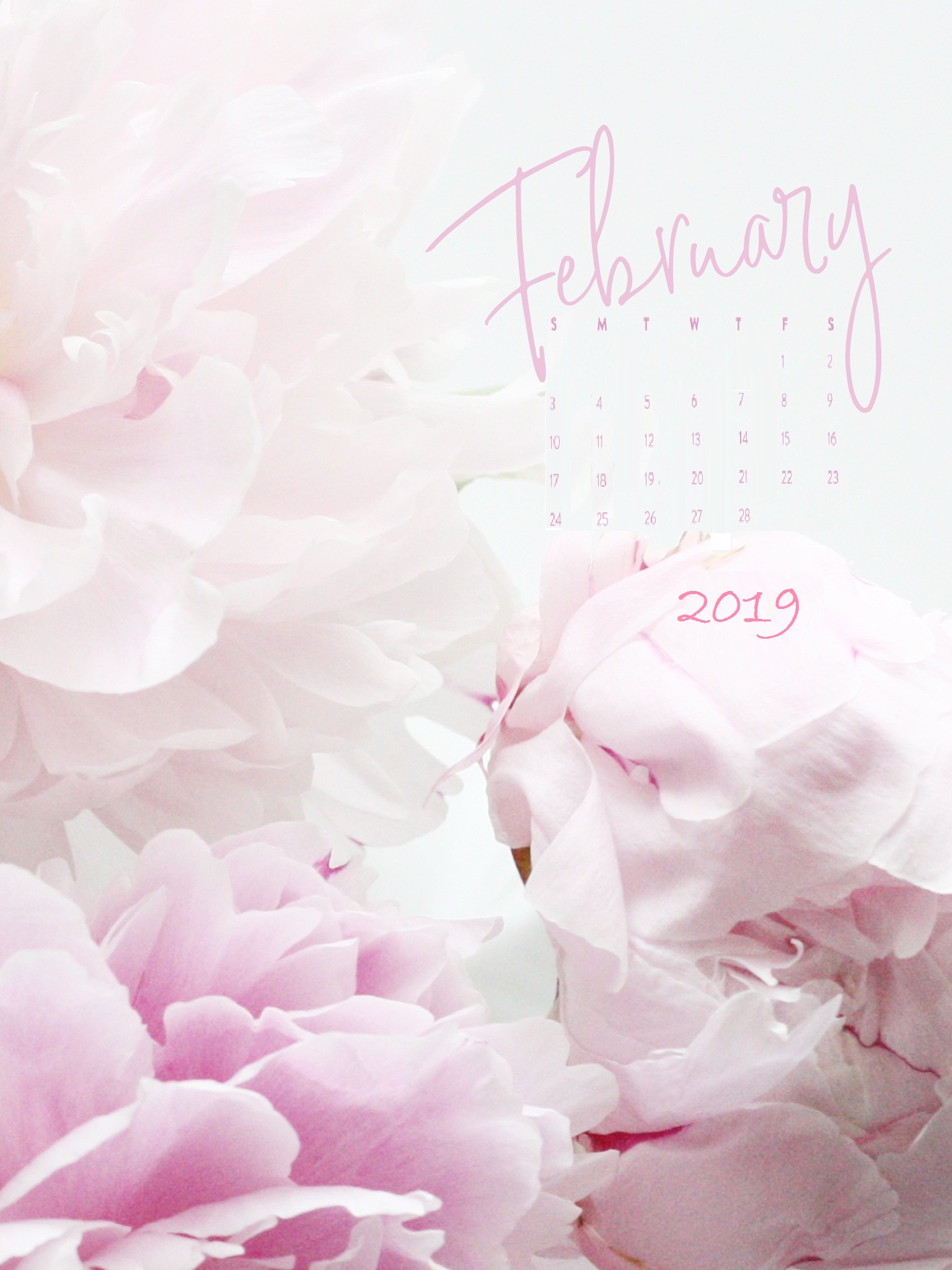 February 2019 Desktop Baby pink Wallpaper