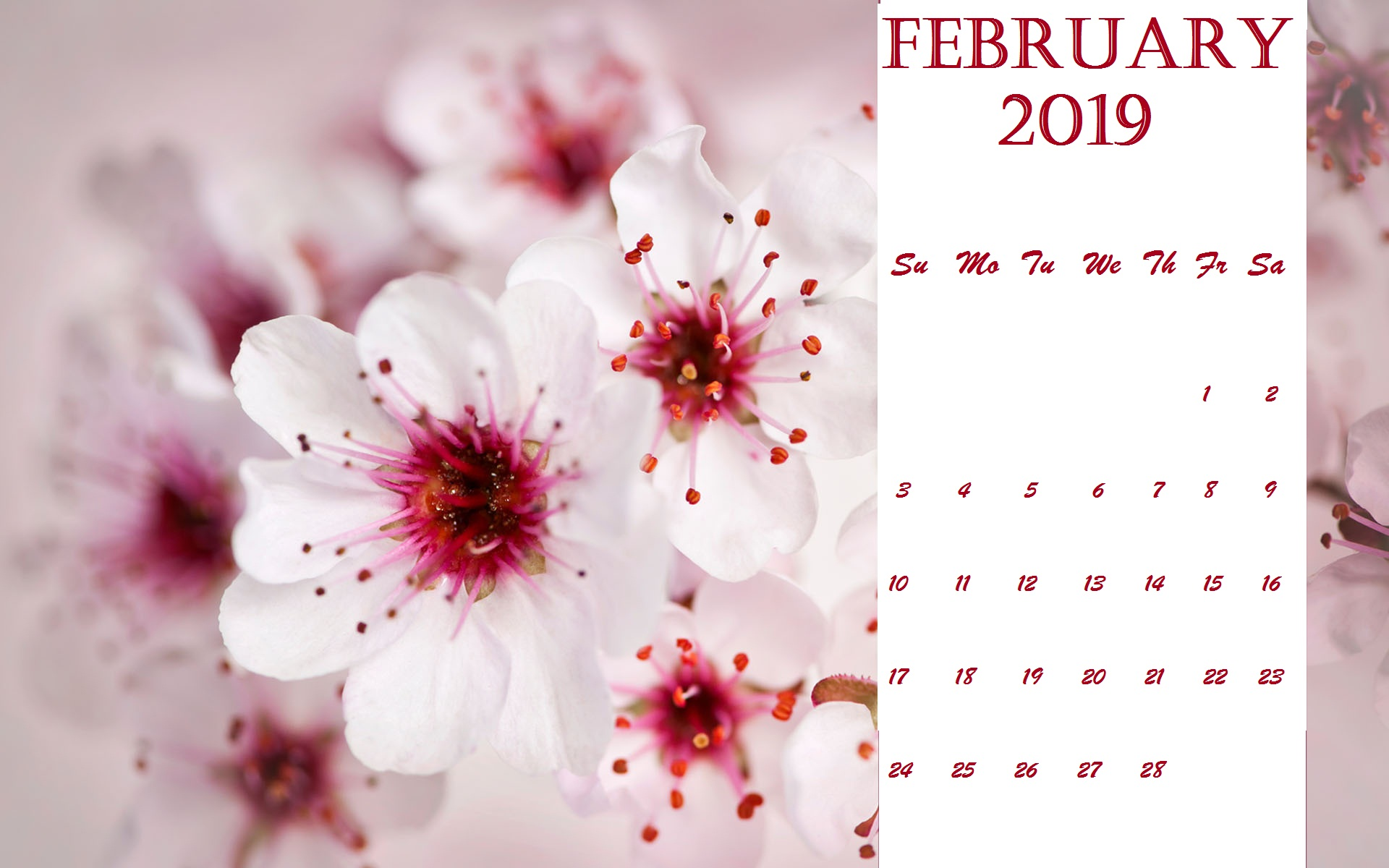 Lovely Flowers Desktop February 2019 Calendar